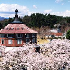 ほくとの桜 清春芸術村の桜