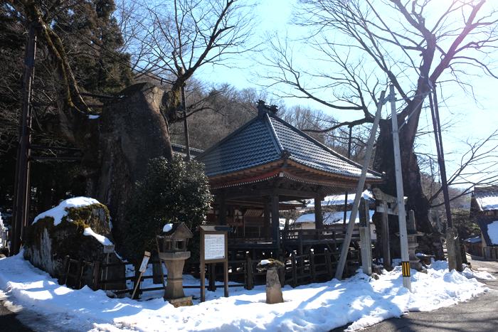 negoya_keyaki_01