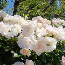 heidi-rose_00