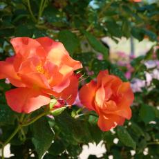 heidi-rose_05