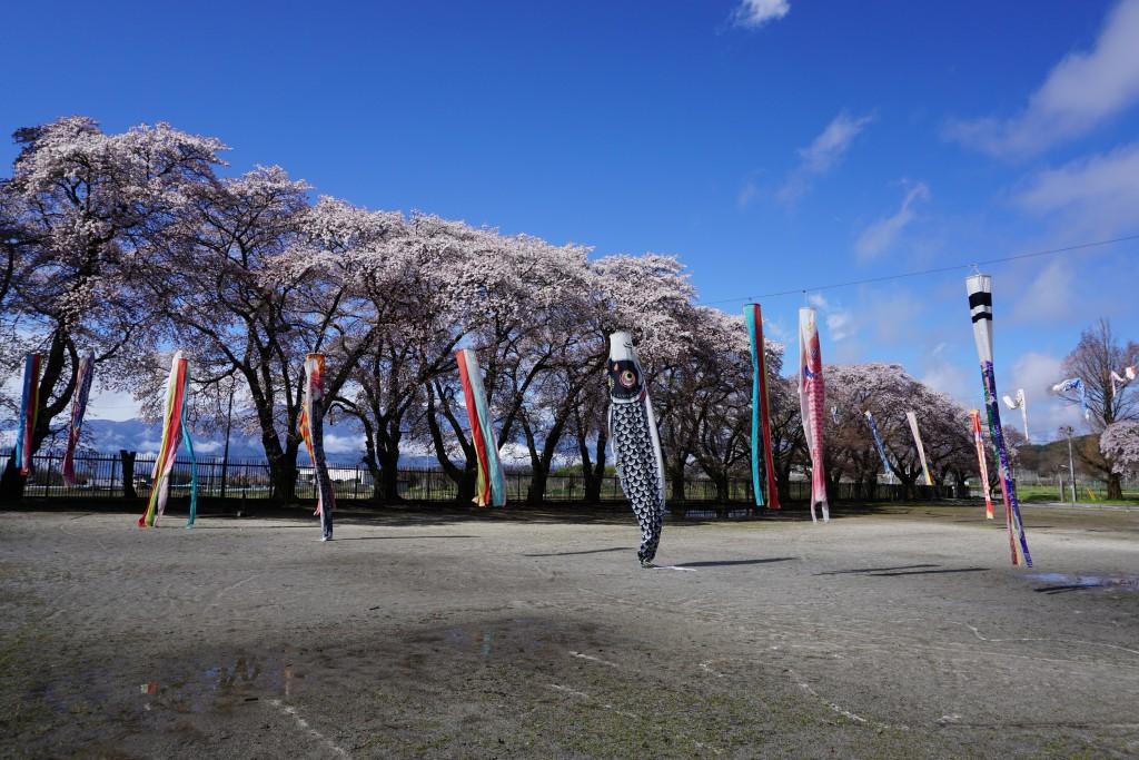 三代校舎ふれあいの里の桜
