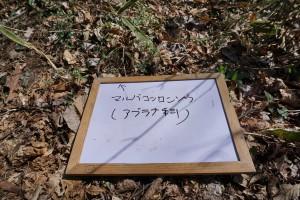 DSC00114 - ブログ