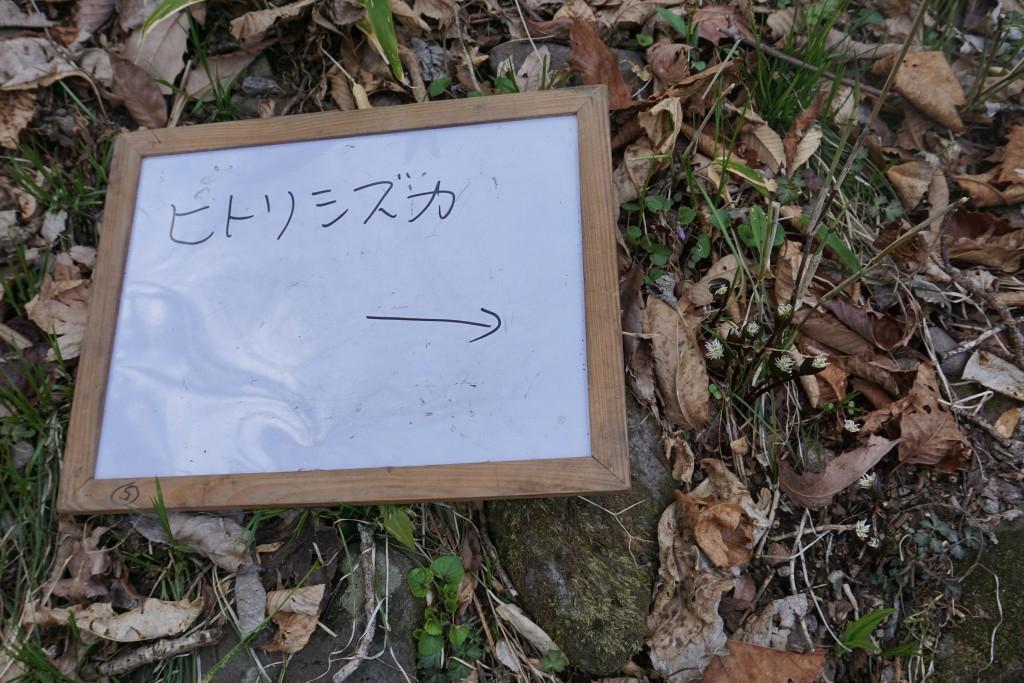 DSC00256 - ブログ