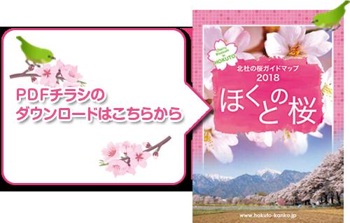 2018sakura_p_but