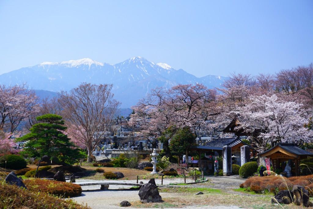 萬休院の桜