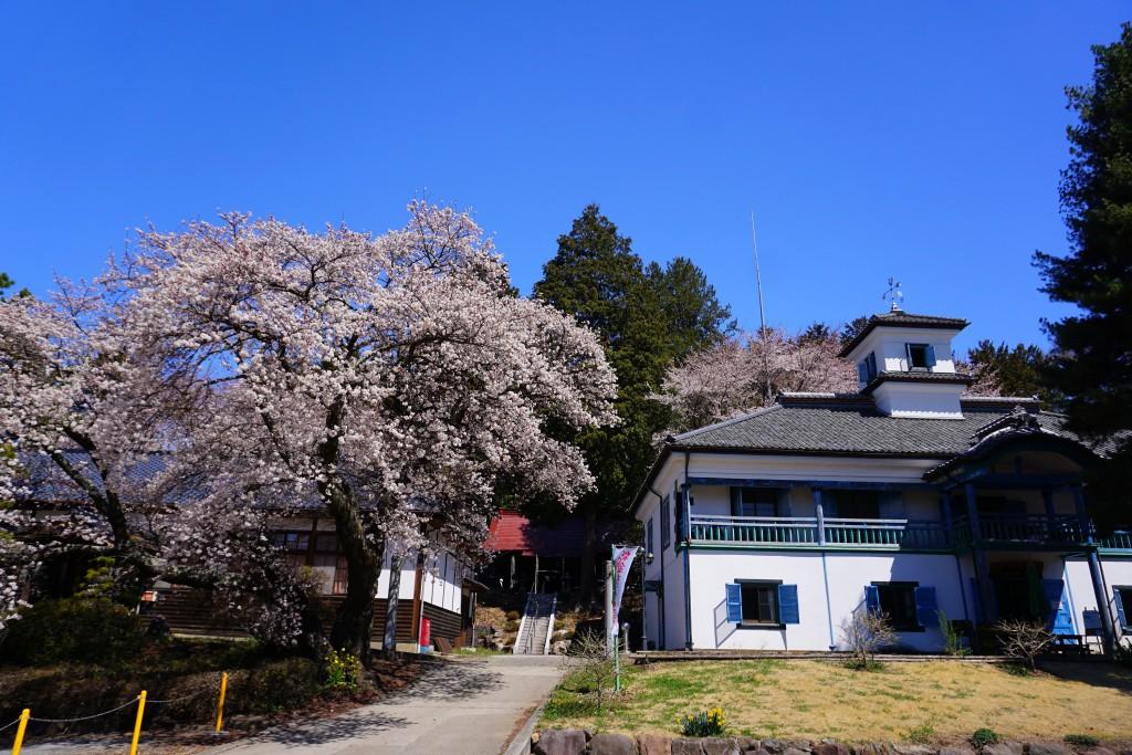 3.2019.4.15 三代校舎ふれあいの里の桜