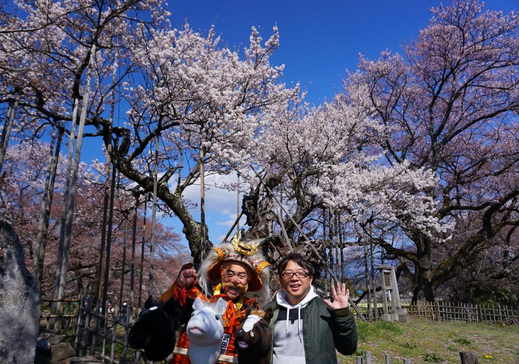 もしもツアーズ 山高神代桜