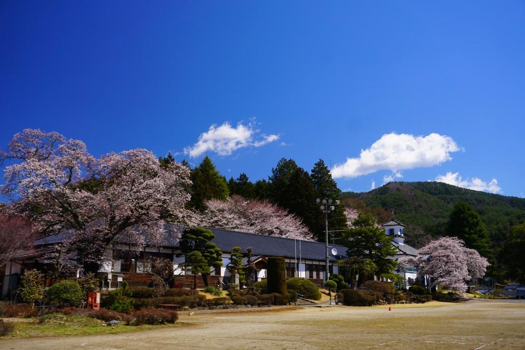 1.2019.4.15 三代校舎ふれあいの里の桜